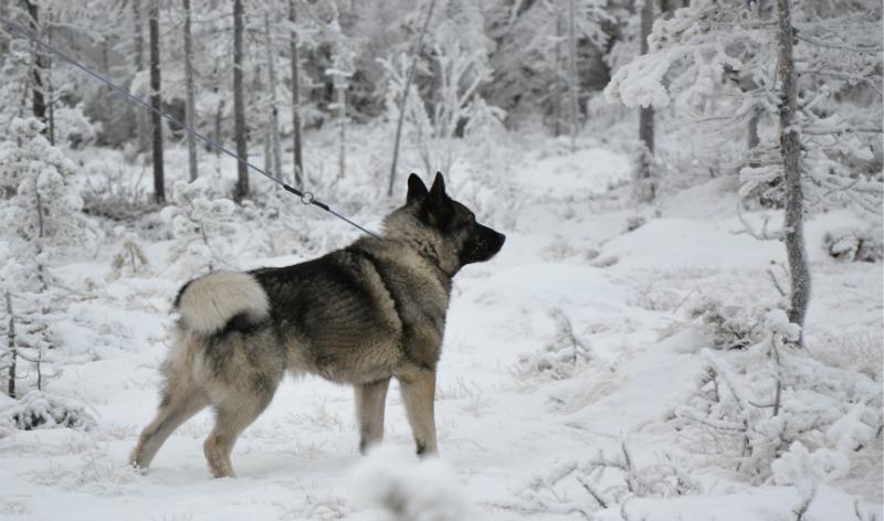 Ännu en bild på Athos 4 år